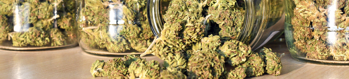 Cannabis: Considerations Before Use